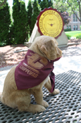 Maroon Flying C Chippewas Dog Bandana