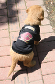 Go Chips Black Flying C Doggy Jersey