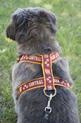 Central Michigan Flying C Pet Harness